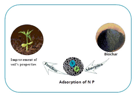 Adsorption Mech Biochar1